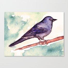 Pinzon azul Canvas Print