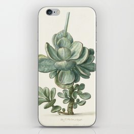 Herman Saftleven - Succulent (probably a Cotyledon orbiculata) - 1683 iPhone Skin