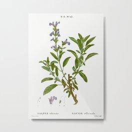 Garden sage, Salvia officinalis from Traité des Arbres et Arbustes que l'on cultive en France en ple Metal Print