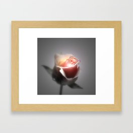 Single Rose Spotlighted Framed Art Print