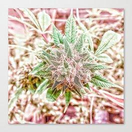 Flower Star Blooming Bud Indoor Hydro Grow Room Top Shelf Canvas Print