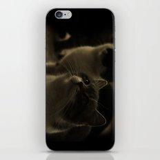 Kitty Katz iPhone & iPod Skin