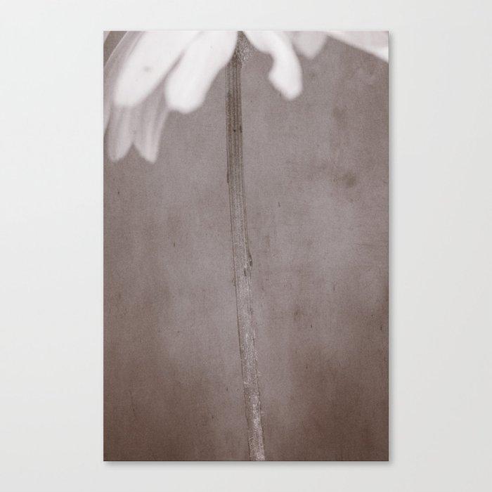 A daisies gold Canvas Print