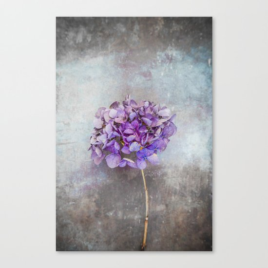Beautiful Lilac Hydrangea Canvas Print