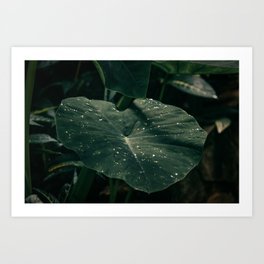 Rainforest Raindrops on Leaves Nature Photography Art Print