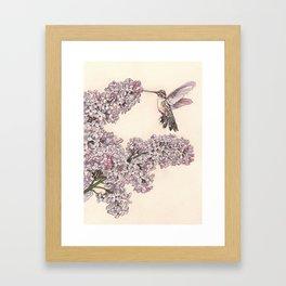 Lilacs & Anna's Hummingbird Framed Art Print