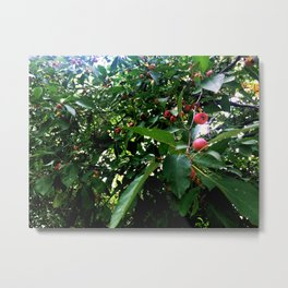 Among the Cherries Metal Print