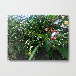 Among the Cherries Metal Print