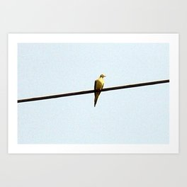 Powerline Dove [Cecilia Lee] Art Print