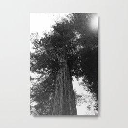 Sequoia National Park III Metal Print