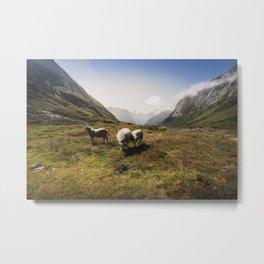 Roaming Sheep in the Mountains Metal Print