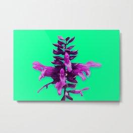Tyrian Purple Metal Print
