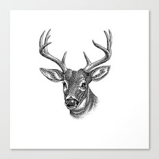 A deer 5 Canvas Print