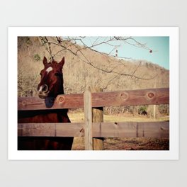 Photography - Horse Art Print