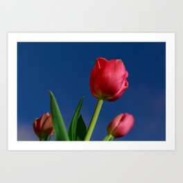 Red Tulips In The Blue Sky Art Print