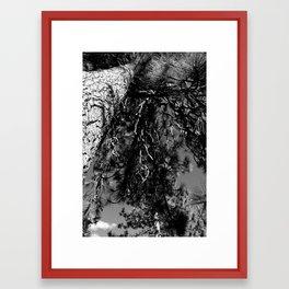 Up The Tree Framed Art Print