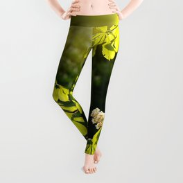 Flowering Aesculus horse chestnut foliage Leggings