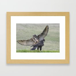 Eagle Owl Attacking Harris Hawk Framed Art Print