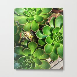 3 Succulents Metal Print