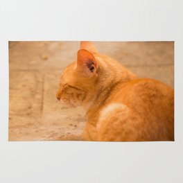 Orange Cat Is Resting On The Terrace  #decor #society6 #homedecor Rug