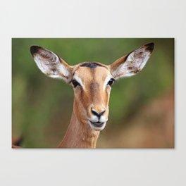 Female Impala, Africa wildlife Canvas Print