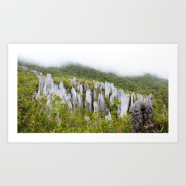 Limestone pinnacles formation at Gunung Mulu national park Borneo Malaysia Art Print