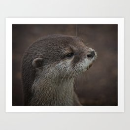 Portrait Of A Young Otter Art Print