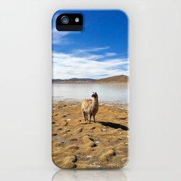 No Drama Llama iPhone Case