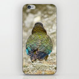 The Mountain Parrot's Back iPhone Skin