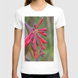 Trumpet Honeysuckle - Buds of Coral Woodbine  T-shirt