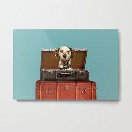 Dalmatian Dog sitting in old suitcase Metal Print