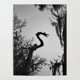 Dragon Shaped Tree Poster