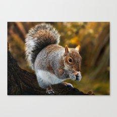 Squirrel nutkin Canvas Print