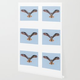 Nine Mile Osprey III Wallpaper