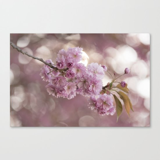 Japanese cherryblossoms in LOVE Canvas Print