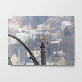 Village Sparrowhawk (Kestrel) 5 Metal Print