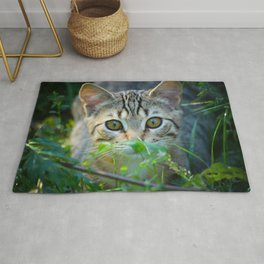 Domestic SHort Hair Cat Peering Through The Bushes Rug