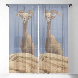 Desert_Bighorn_Sheep Portrait II - Valley_of_Fire State_Park Sheer Curtain
