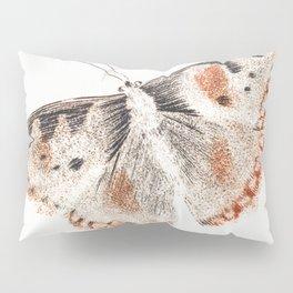 A butterfly by Johan Teyler (1648-1709) Pillow Sham