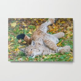 Playful Lynx Metal Print