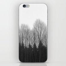 Trees in rows iPhone & iPod Skin