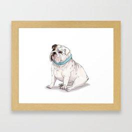 English Bulldog with Blue Scarf Framed Art Print