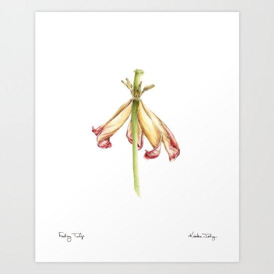 Fading Tulip Art Print