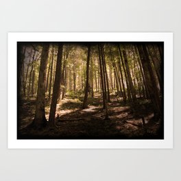 Smoky Mountain Forest Art Print