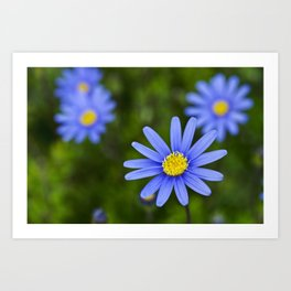 Blue Flower, Yellow Heart Art Print