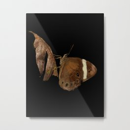 Brown butterfly - 109 Metal Print
