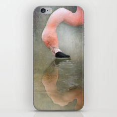 Narcissus in pink.... iPhone & iPod Skin