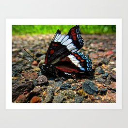 """""""Hurt no living thing: Ladybird, nor butterfly, Nor moth with dusty wing."""" Art Print"""