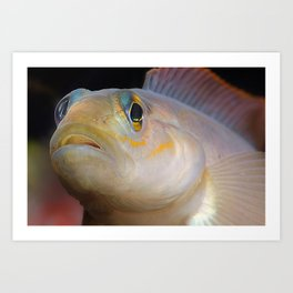 Goby Fish Staring Face Art Print