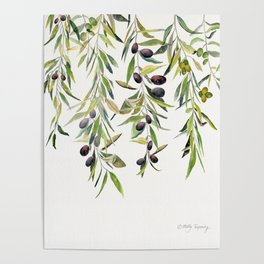 Olive Branch Watercolor  Poster